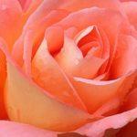 Дыхание маткой: женская практика для очищения и наполнения силой